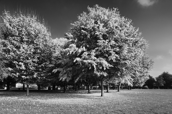 Autumn In The Park 5