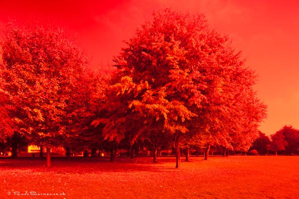Autumn In The Park 7