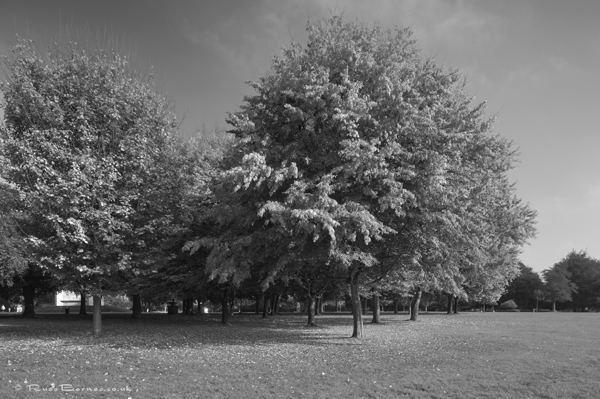 Autumn In The Park 8