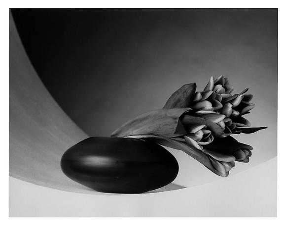 Robert Mapplethorpe Tulips