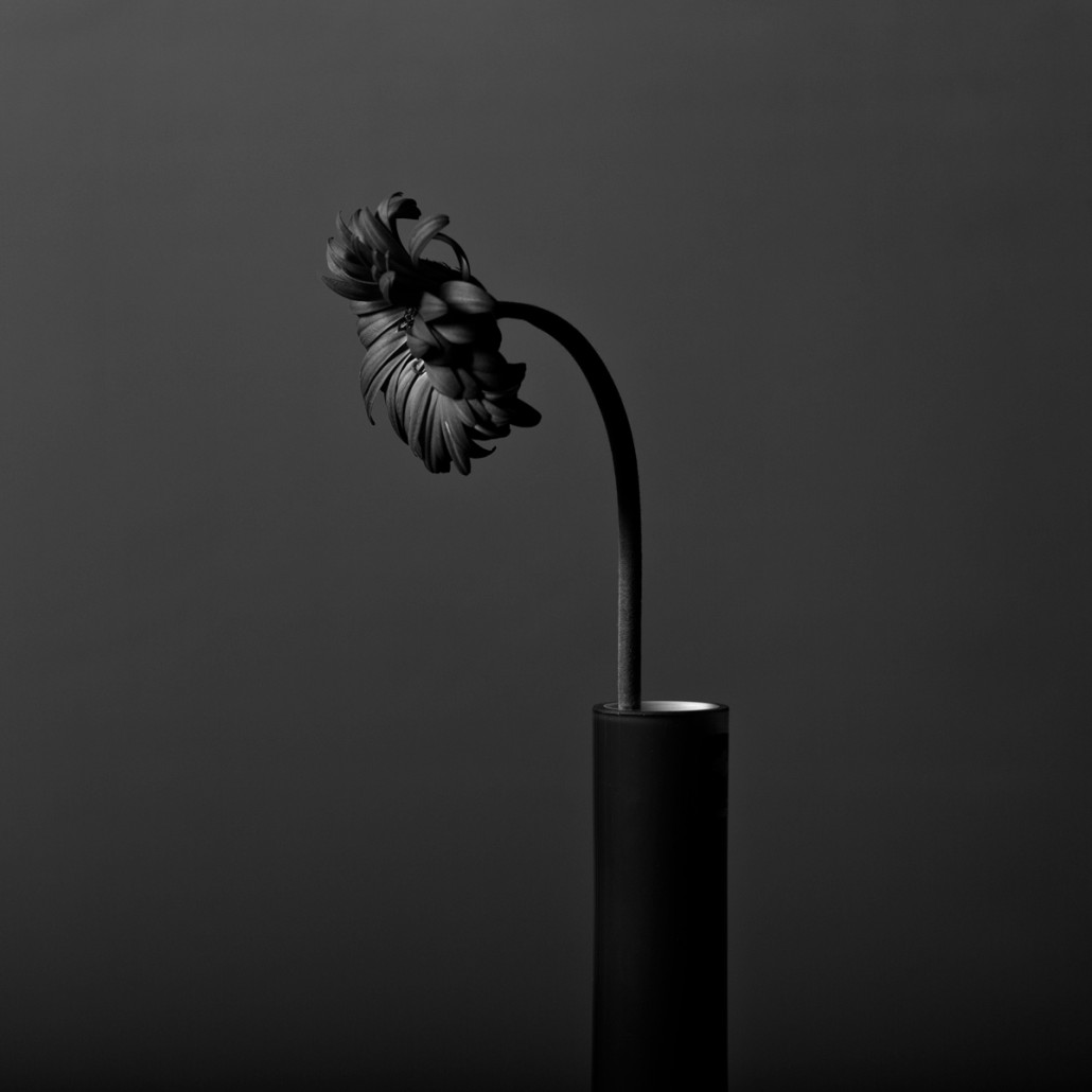 Black and white still life photography bwvision black and white photo 2 is also a neutral conversion but this time with a blue filter to increase the darker tones in the flower itself mightylinksfo Image collections
