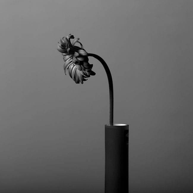 black and white still life blue filter