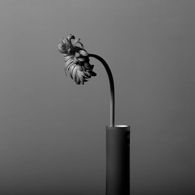 black and white still life neutral