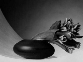 Robert-Mapplethorpe-Tulips