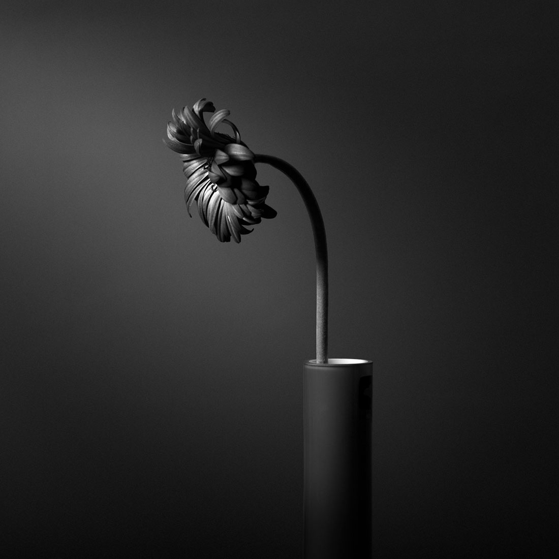 So What - Black and white floral still life photograph