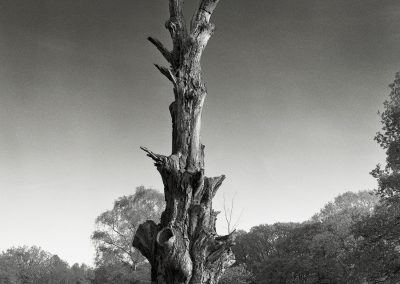 Old Tree - 4x5 Large Format